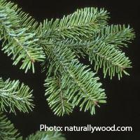 FPII project balsam fir with credit