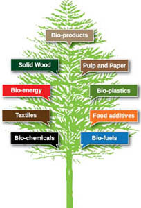 page Bio-Products Tree